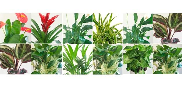 Jardines verticales citysens en tu oficina adeyaka bcn - Jardines verticales plantas ...